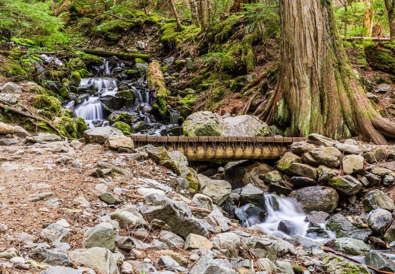 在夏时的快速的山小河在garibaldi省公园加拿大 库存图片