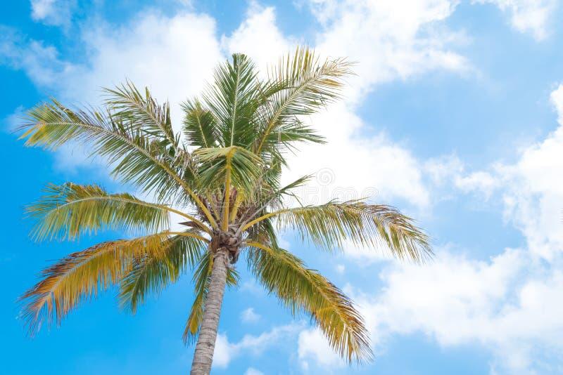 在夏时的美丽的椰子树 概念旅行,假日和 库存图片