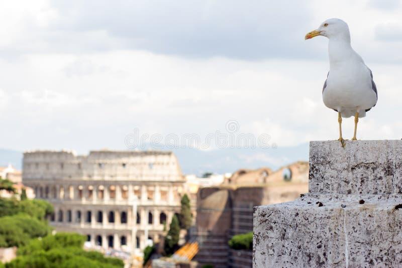 在外型的鸥在罗马 免版税库存图片