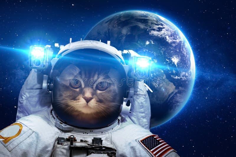 在外层空间的美丽的猫 免版税图库摄影