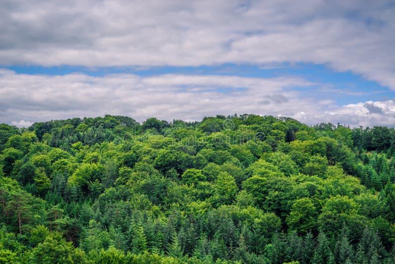 在多云天气的绿色树 库存图片