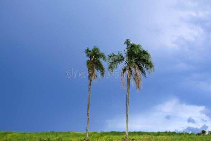 在多云天空的椰子 库存照片