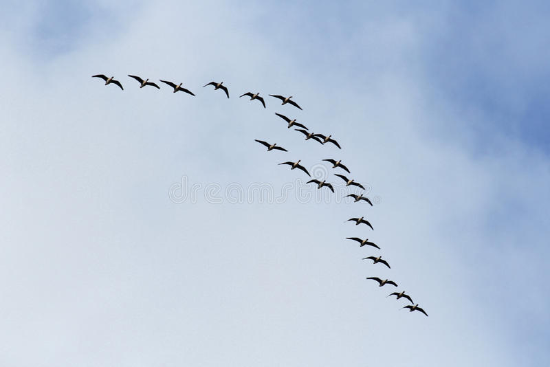 在多云天空的飞鸟 免版税库存图片