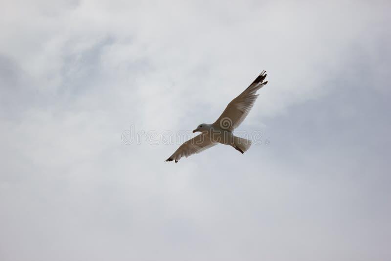 在多云天空-背景的风景美好的蓝色云彩鸟飞行 免版税库存图片