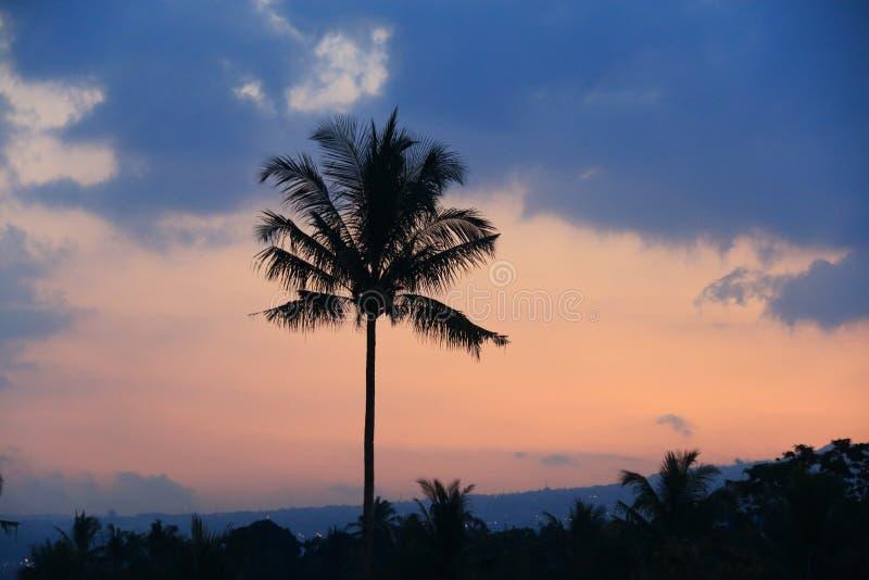 在多云的日落的剪影椰子 免版税库存照片