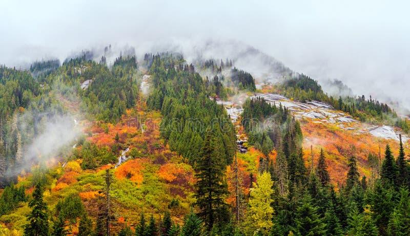 在多暴风雨的天气的惊人的秋叶在Coquihalla山顶, 免版税库存照片
