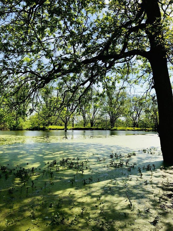 在多沼泽的支流的秋天 免版税库存照片