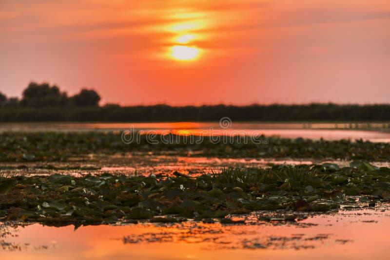 在多瑙河三角洲的美好的日落 库存图片