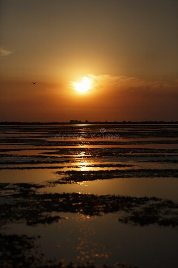 在多瑙河三角洲的美好的日落 免版税库存照片