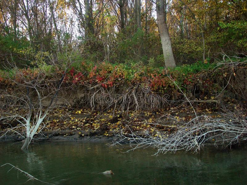 在多瑙河的秋天故事km的358 1 免版税库存图片