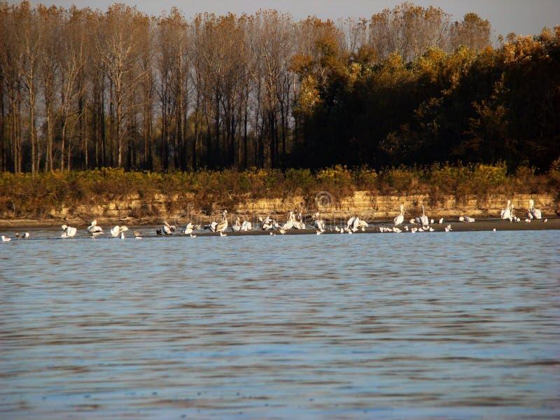在多瑙河的秋天故事km的360 1 库存图片