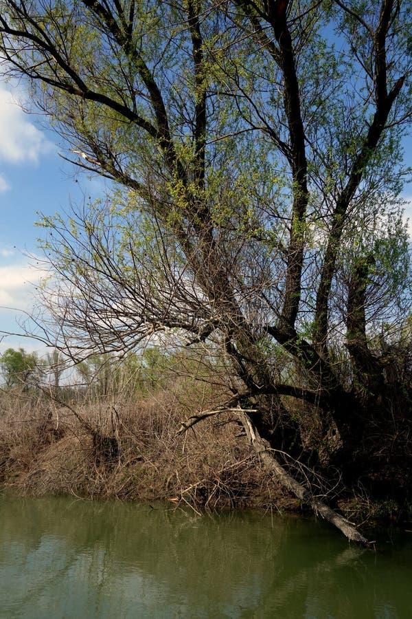 在多瑙河胳膊4的春天旅行 库存图片