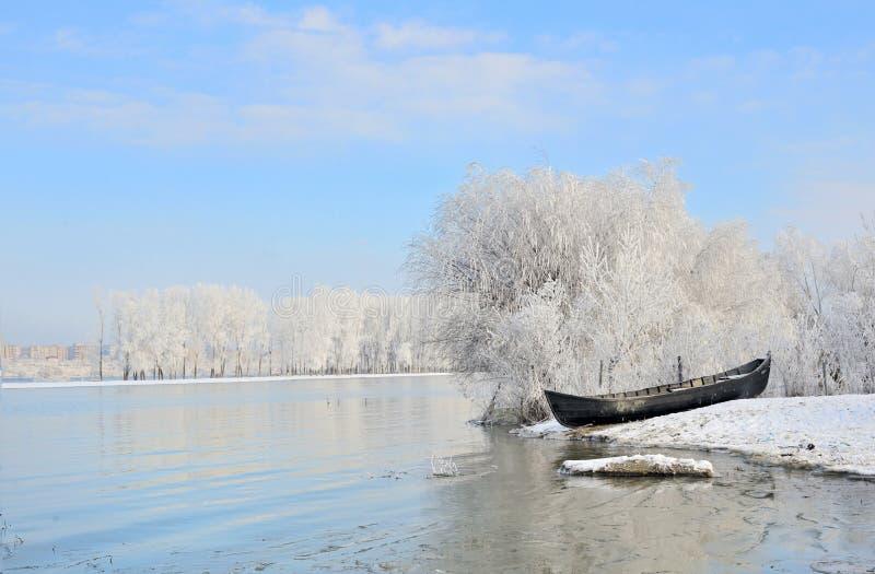 在多瑙河附近的冷淡的冬天树 免版税库存照片
