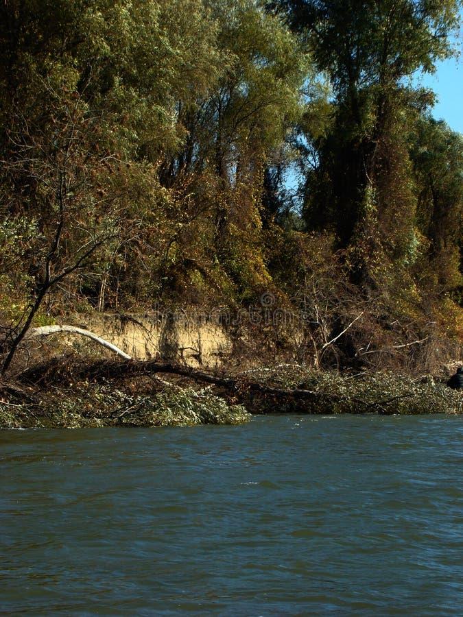 在多瑙河6的秋天故事 库存照片