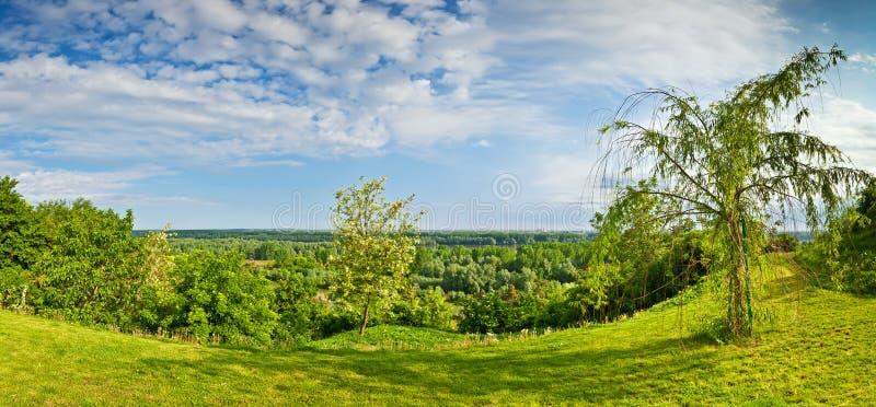 在多瑙河ilok全景河森林附近 库存照片