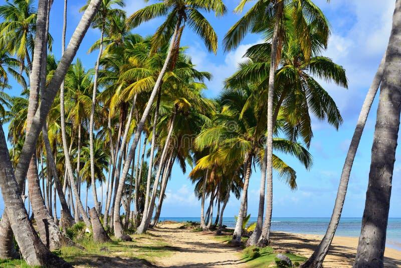 在多米尼加共和国的Playa Bonita海滩 免版税库存照片