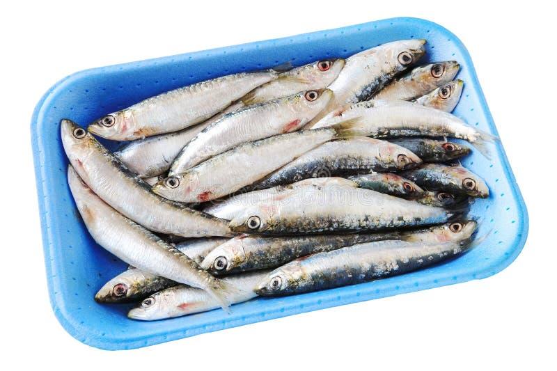在多苯乙烯箱子的沙丁鱼 免版税库存图片