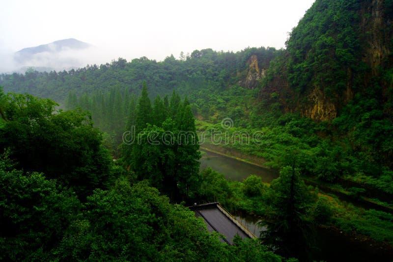 在多雨以后的Wuxie森林 库存图片