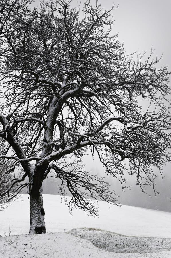 在多雪的冬天风景的树 库存图片