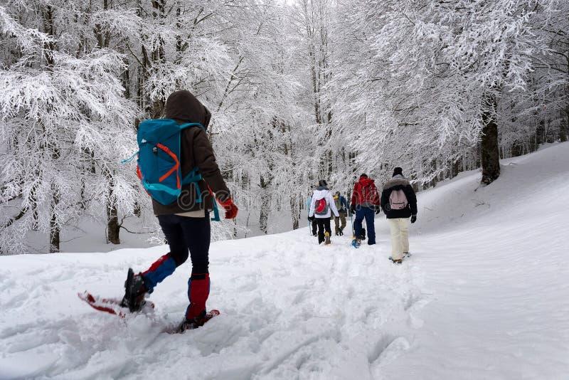 在多雪的山道路的雪靴远足 在backgroun的树 免版税库存照片