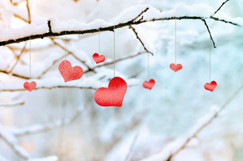 在多雪的树枝的木红色心脏在冬天 图库摄影