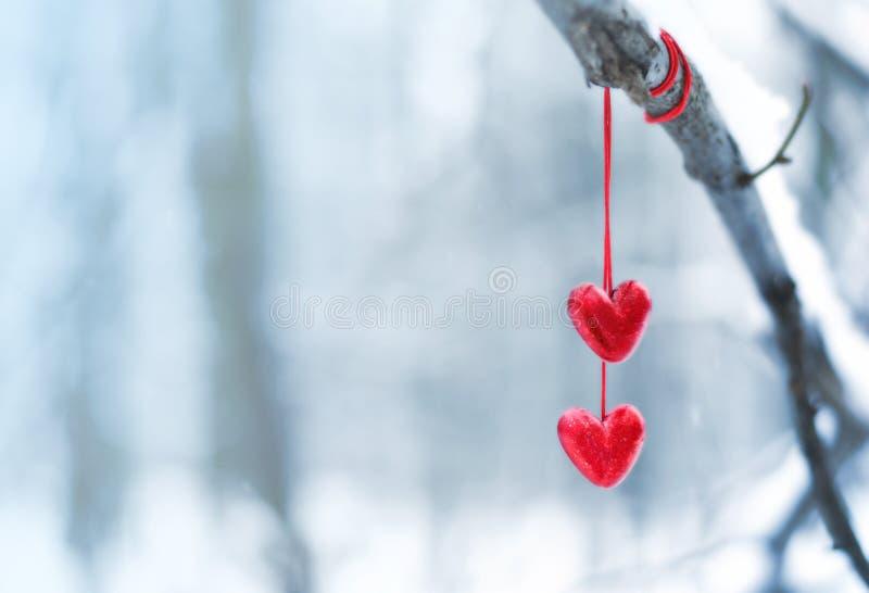 在多雪的树枝的红色心脏在冬天 假日愉快的情人节庆祝心脏爱概念 免版税库存图片