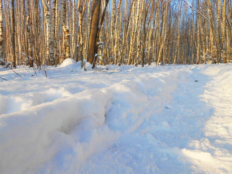 在多雪的桦树的冬天晚上增长与道路 库存照片