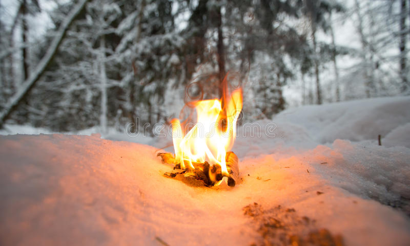 在多雪的清洁的篝火在森林 免版税库存图片