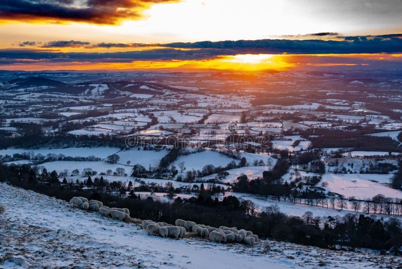 在多雪的科茨沃尔德小山的太阳设置与在前景的绵羊 库存图片
