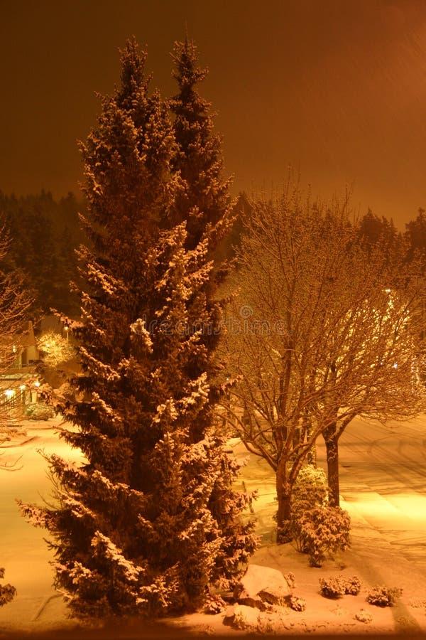 在多雪的街道的结构树 库存照片