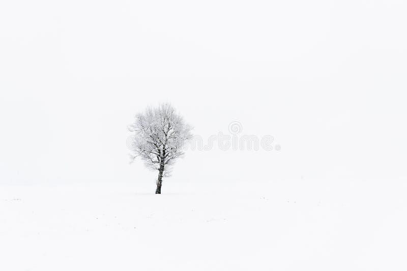 在多雪的领域的贫瘠树 免版税库存图片