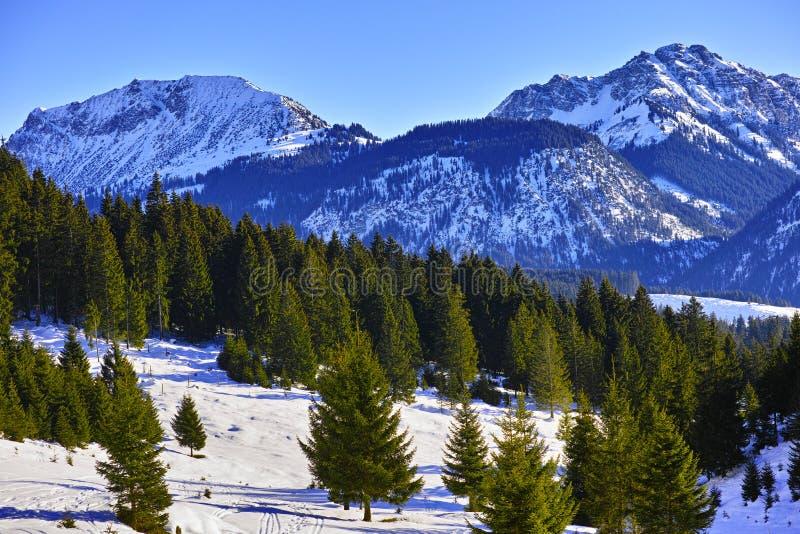 在多雪的高山风景的绿色冷杉木 库存照片