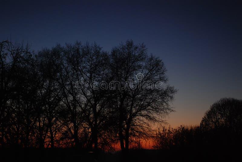 在夜云彩的光秃的树 库存照片