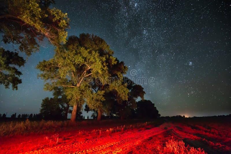 在夜满天星斗的天空的银河星系在树上在夏天森林里 库存图片
