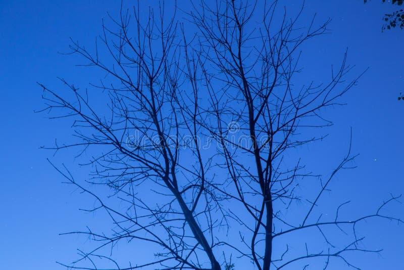 在夜空的死的树 免版税库存图片