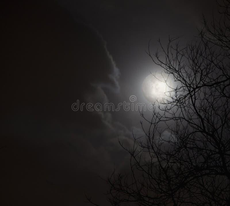 在夜空的满月与树云彩和剪影。 免版税库存图片
