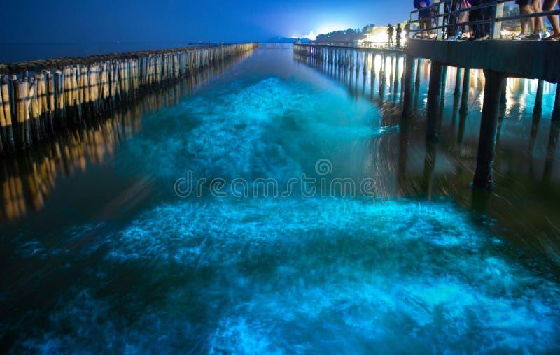 在夜蓝色海水的生物体发光 生物发光浮游生物蓝色萤光波浪关于美洲红树森林的在Khok西康省,萨穆特 库存照片