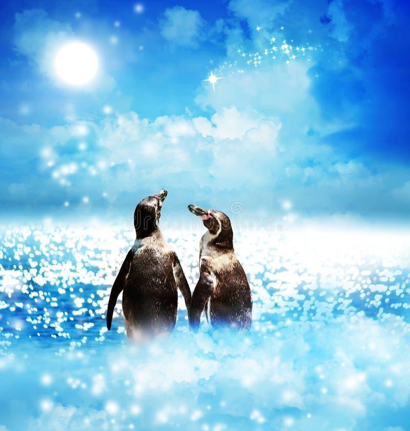 在夜幻想风景的企鹅夫妇 库存照片