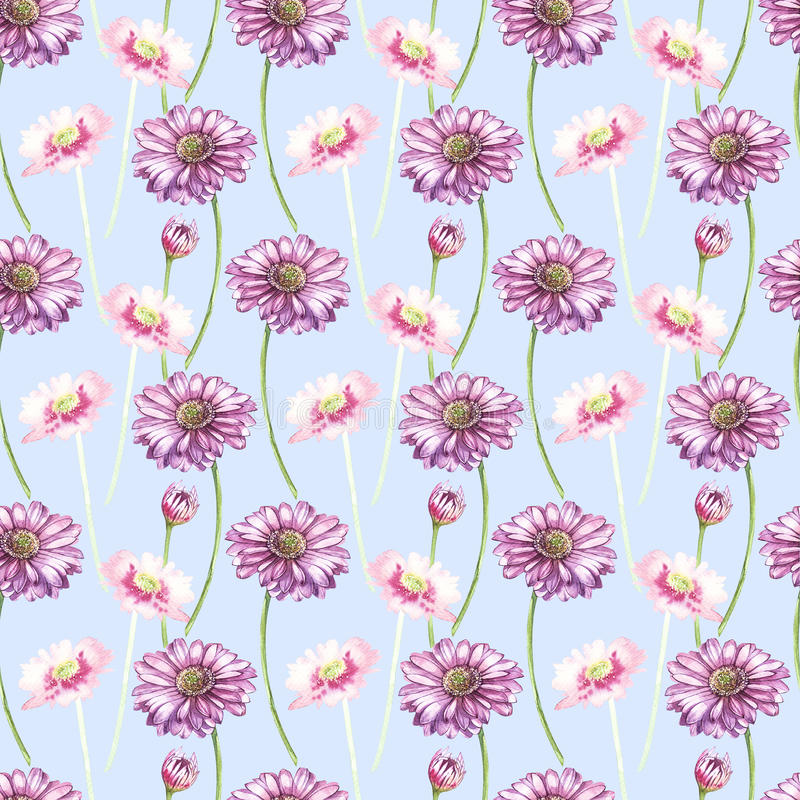 在大丁草花的水彩的例证 与花的花卉卡片 植物的例证无缝的样式 皇族释放例证