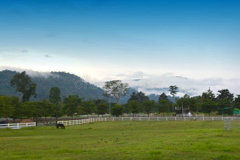 在大农场的美丽的马 免版税库存照片