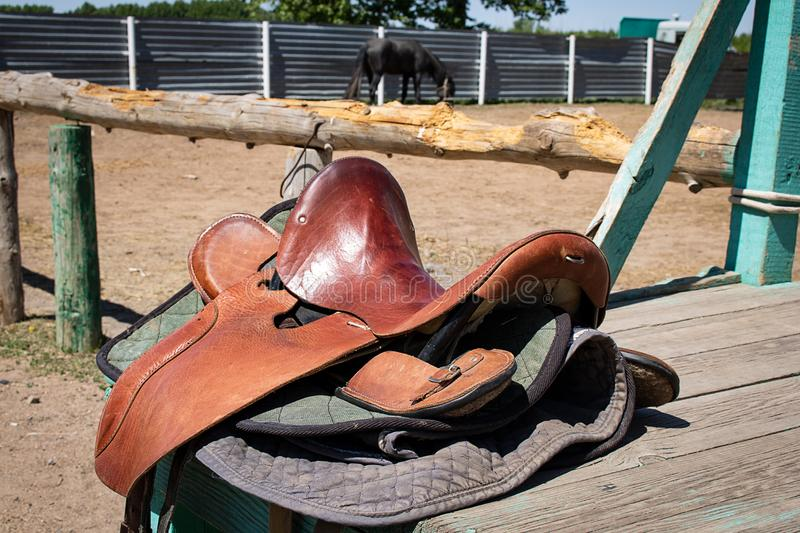 在大农场,吃在仓前空地的公马的马马鞍干草 库存照片