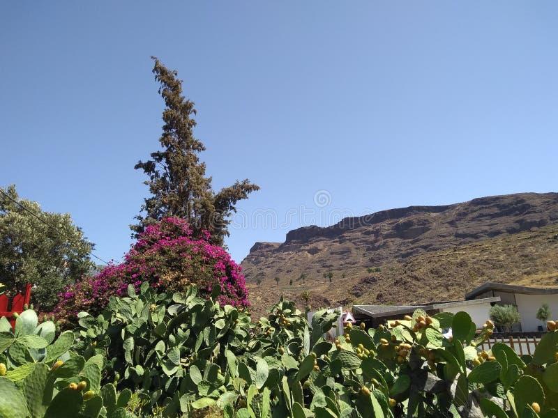 在大加那利岛的La Sorrueda 库存图片