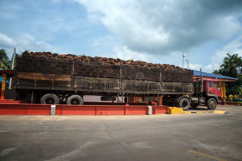 在大卡车的棕榈果子 库存图片