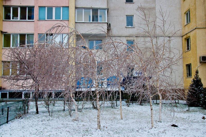 在大厦前面的小树 库存图片