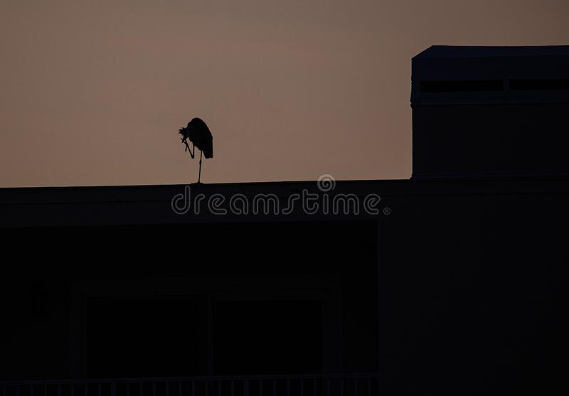 在大厦,印度岩石海滩,佛罗里达的伟大蓝色的苍鹭的巢剪影 免版税库存图片