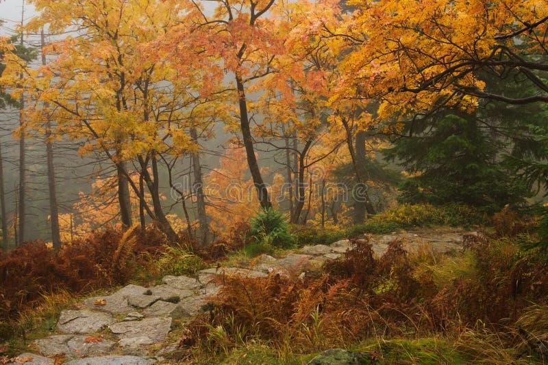 在大山的秋天 库存照片