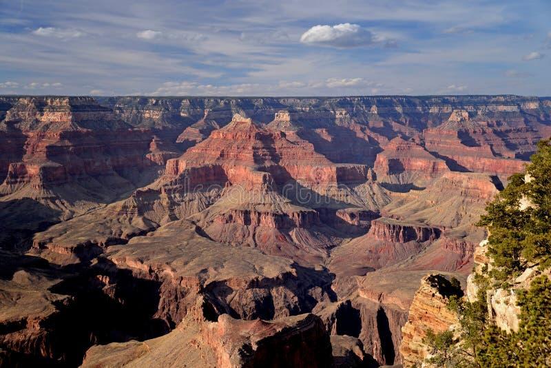 在大峡谷的红色岩层环境美化在南外缘,亚利桑那 库存照片