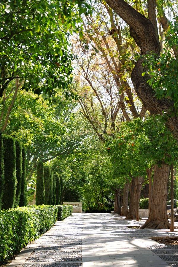 在大教堂附近的公园在帕尔马,西班牙 库存图片