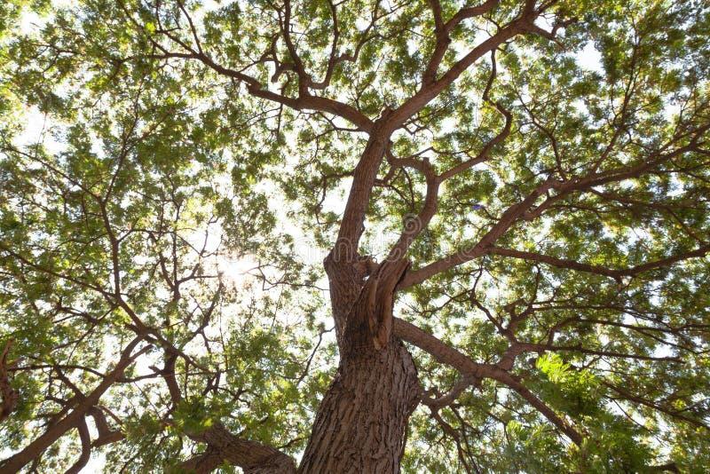 在大树下 免版税库存图片