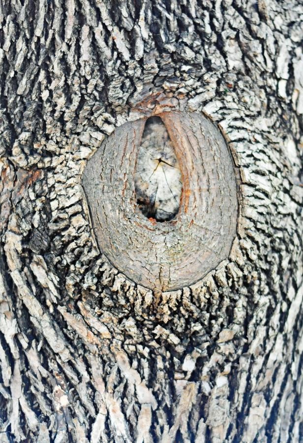 在大树的木五谷,非常艺术性 库存照片